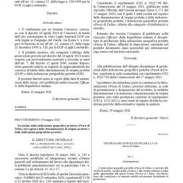 Disciplinare di produzione definitivo della Pesca di Delia I.G.P.-001